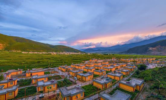 云南劍川:索瑪花開幸福來