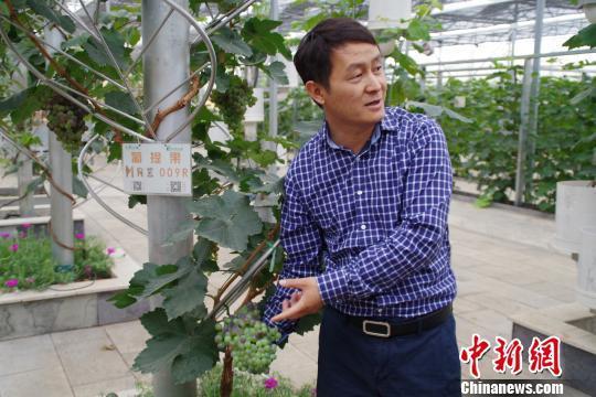图为孙永斌介绍基地培育的葡萄品种 陈静 摄