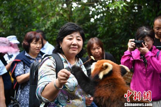 海外华文媒体在太阳河国家森林公园与长臂猿、小熊猫等野生动物亲密接触。 刘冉阳 摄