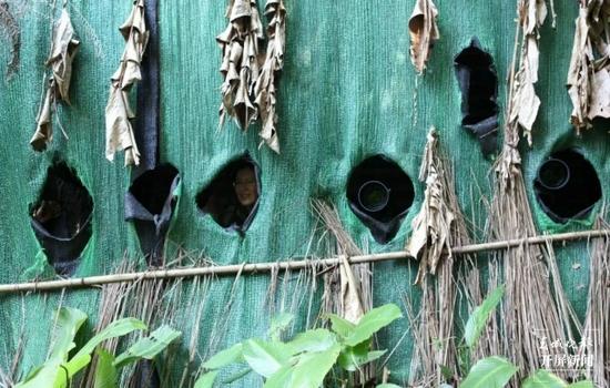 """""""鸟塘经济""""兴起,西双版纳这个县成拍鸟摄影师打卡地!"""