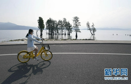 8月4日,游人在大理市洱海生态廊道上骑行。新华社发(梁志强 摄)