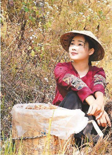"""""""滇西小哥""""在山里采摘水果。受访者供图"""