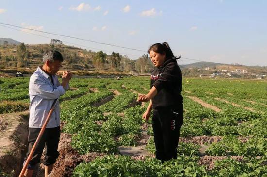 姚美秀向农民讲解种植技术