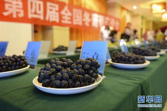 这是10月25日在全国优质冬葡萄评比中拍摄的参评产品。