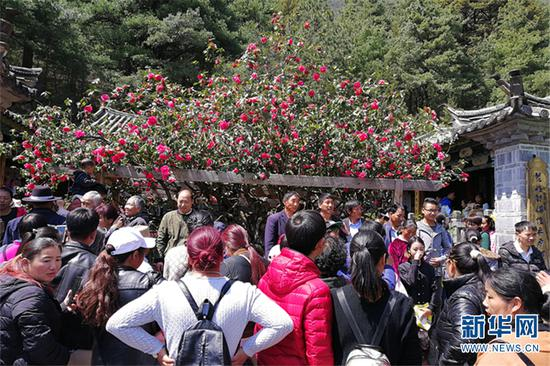 """市民及游客""""三多节""""到玉峰寺赏花。和红艳 摄"""