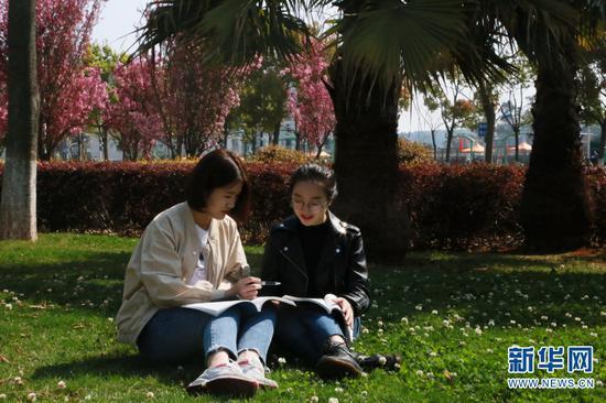 校园内学生们在花下看书学习 秦丹丹(左)杜紫婷(右)。新华网 马一文 摄