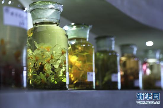斛哥庄园里陈列着各个品种的石斛酒。新华网 丁凝 摄