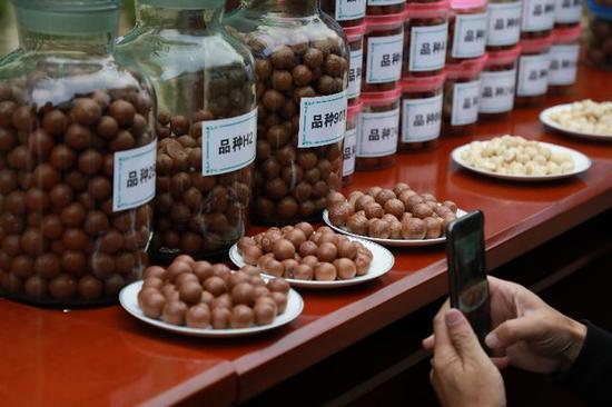云南澳洲坚果品种丰富。新华社记者许万虎摄