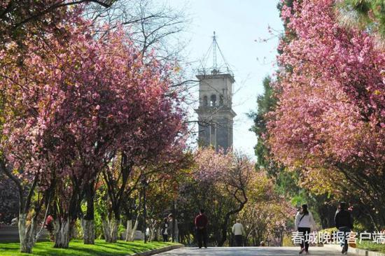 △云南大学钟楼 春城晚报记者 高伟 摄