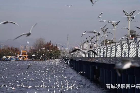 △海埂大坝 春城晚报记者 高伟 摄