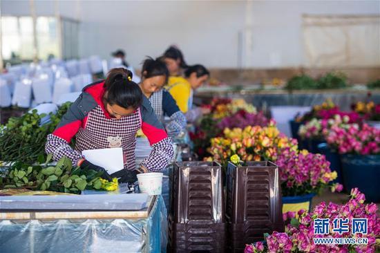 2月14日,在中国云南石林彝族自治县锦苑花卉产业园,工作人员对鲜花进行包装。 新华社记者 江文耀 摄