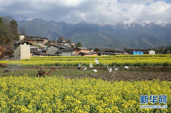 油菜花海成为了当地发展生态旅游、乡村旅游、促进农旅融合的自然资源。(刘正凡 摄)