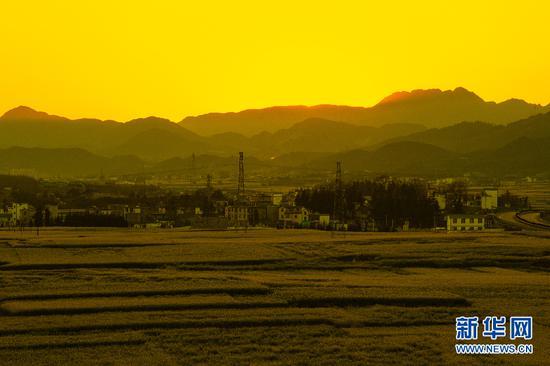 夕阳从天边滑下,黄绿相间的油菜花田将逐渐隐没于夜色中。新华网发 鲍禹 摄