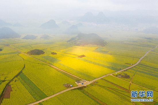 随着太阳升起,云雾逐渐散开,油菜花田慢慢显现。新华网发 鲍禹 摄