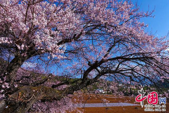 春来遍是桃花水,不辨仙源何处寻。——王维《桃源行》摄影 崔永江