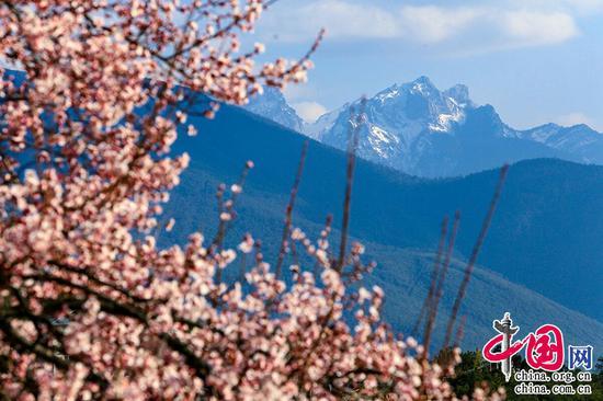 桃花春色暖先开,明媚谁人不看来。——周朴《桃花》摄影 崔永江