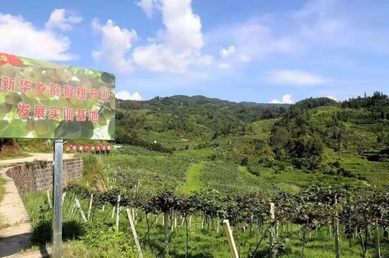 腾冲市新华乡猕猴桃产业发展实训基地。
