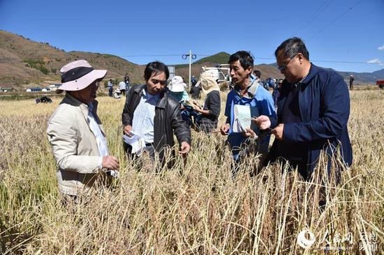 省内外专家组测产验收。摄影:赵庆祖