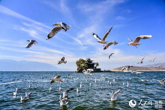 大理洱海。摄影:杨继培