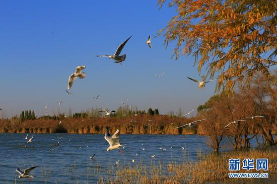 图为昆明市冬季捞鱼河湿地公园。新华网 赵普凡 摄