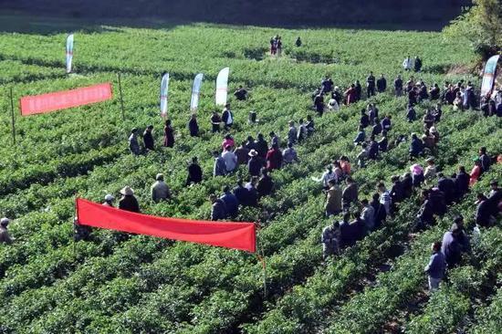 墨江扶贫进行时|龙坝镇:企业订单种植辣椒 助力产业做大做强