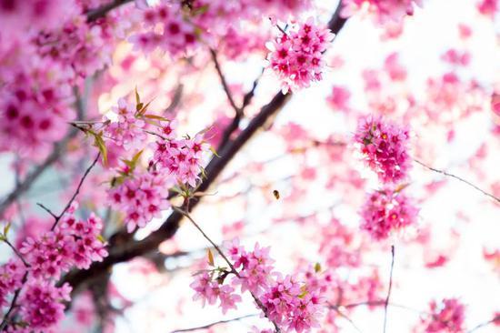 跨过山海,遇见春日,五一假期选择彝人古镇的理由