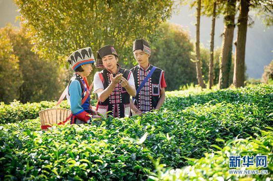 秦晓绍(中)在介绍采茶标准(摄于5月29日)。新华网发 供图
