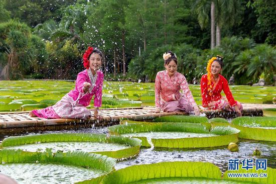 西双版纳热带植物园,王莲进入最佳观赏期(摄于7月4日)。新华网发(张娇娇 摄)