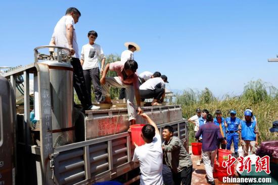 工作人员搬运抗浪鱼。