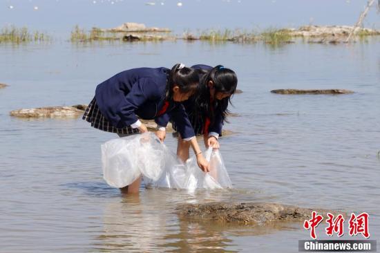 小学生放流抗浪鱼。