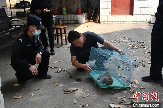 图为民警对蜂猴进行救助。德宏边境管理支队供图