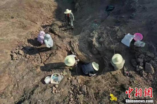图为云南禄丰恐龙幼体化石发掘现场。 云南大学提供 摄
