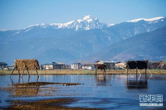 2019年3月14日在云南省香格里拉市拍摄的纳帕海。新华社记者 胡超 摄