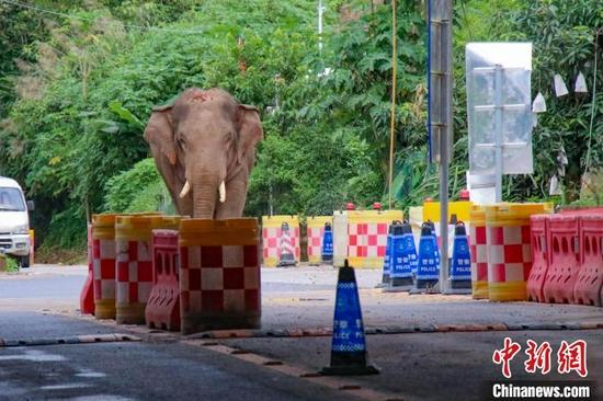 图为野象走近边检站。 勐康边检站供图
