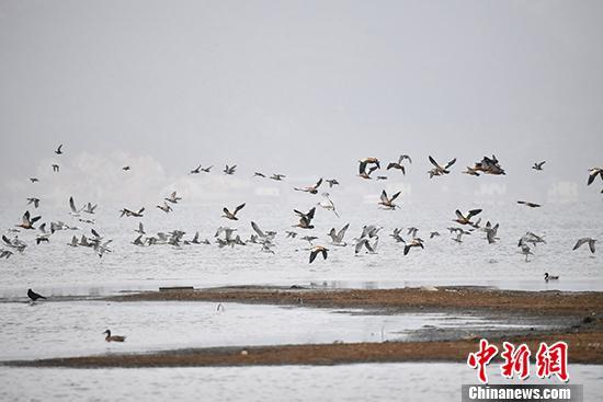 图为3月23日拍摄的纳帕海。纳帕海湿地生态修复后,冬季这里变成候鸟天堂,吸引来大量观鸟爱好者,拉动了迪庆冬季旅游市场。 中新社记者 刘冉阳 摄