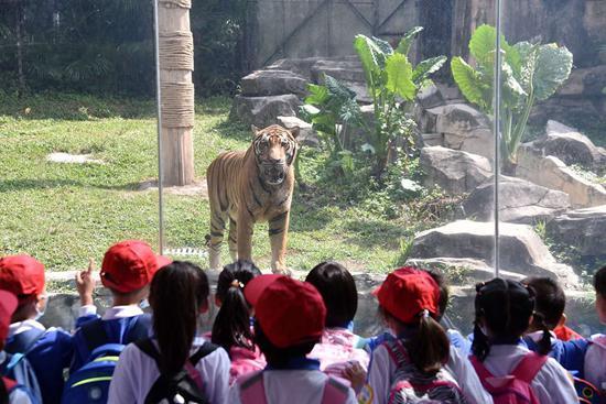 10月9日,国内一家野生动物园迎来首批学生秋游团。视觉中国供图