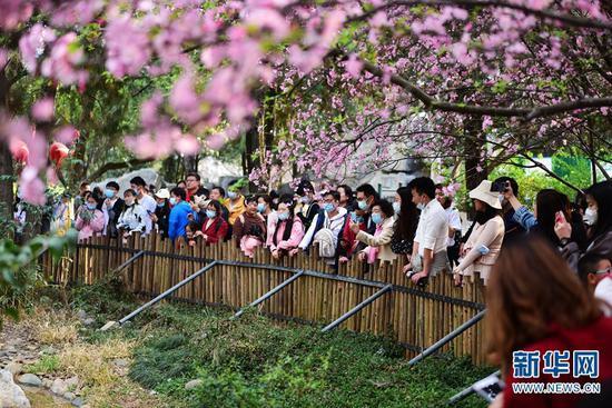 """""""圆通花潮""""吸引了众多游客的到来。新华网发(李明 摄)"""