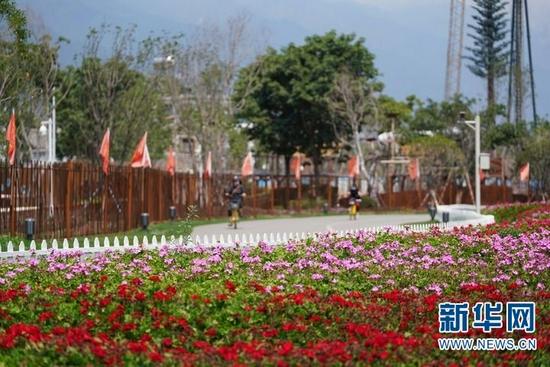 大理市洱海生态廊道旁鲜花盛开(8月4日摄)。新华社发(梁志强 摄)