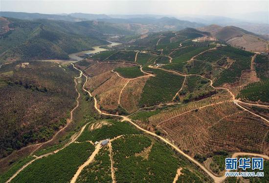 这是4月8日无人机拍摄的云南弥勒朋普镇可乐村荒山上的果园。 新华社记者杨宗友摄