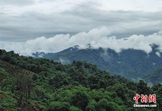 石梯村有着优美的风光和自然资源,吸引了大批鸟类。中新网记者 张旭 摄
