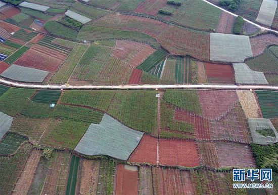 这是4月8日无人机拍摄的云南弥勒新哨镇路体村连片葡萄果园。 新华社记者杨宗友摄