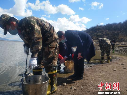 图为当地组织人员清理死鱼。 钟欣 摄