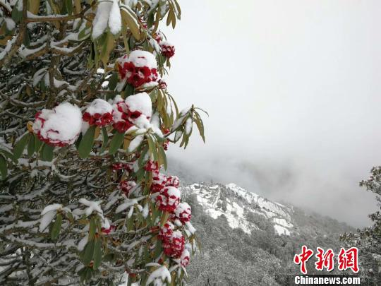 图为轿子雪山雪景。轿子雪山景区工作人员提供