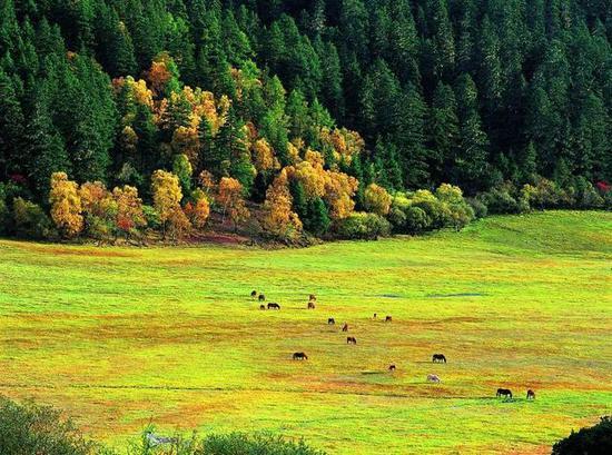 普达措国家公园,这里的美没看过你都得后悔