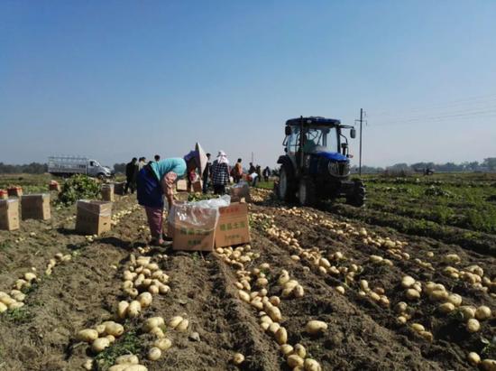 省农科院形成一批科技成果转化示范