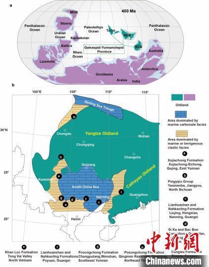 长吻三歧鱼在曲靖发现的古地理意义(盖志琨 供图)