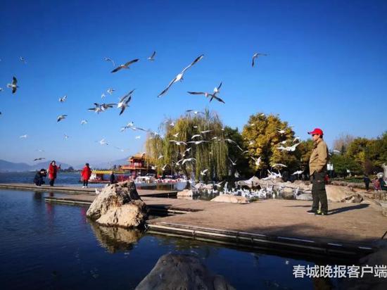 △海埂公园 春城晚报记者 刘普礼 摄