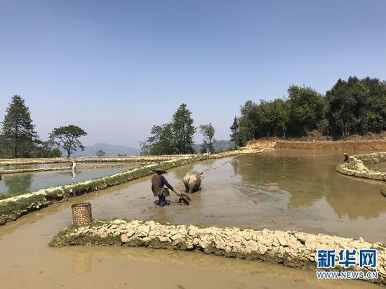 农户正在梯田里忙碌,准备春耕。(新华网 詹晶晶 摄)