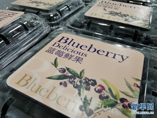 打包分拣好的蓝莓鲜果。新华网发 张立嵩 摄