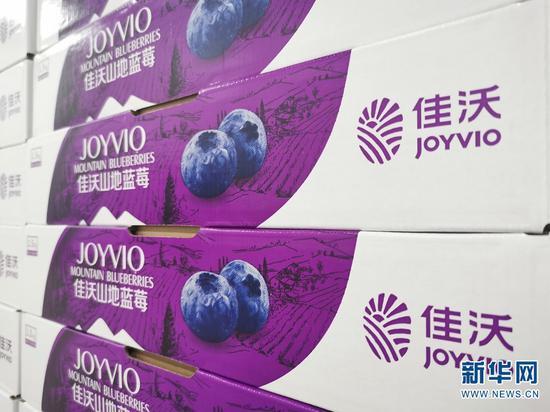 佳沃蓝莓。新华网发 张立嵩 摄